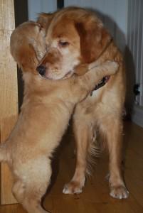 Alla behöver i en kram ibland